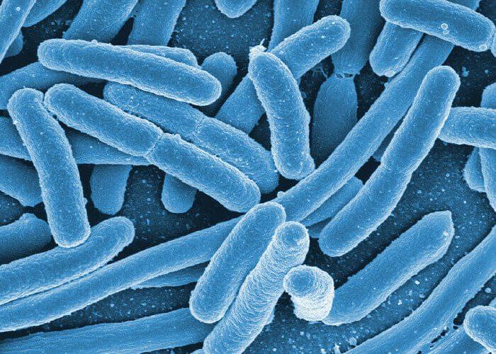 baktérie - probiotické kultúry