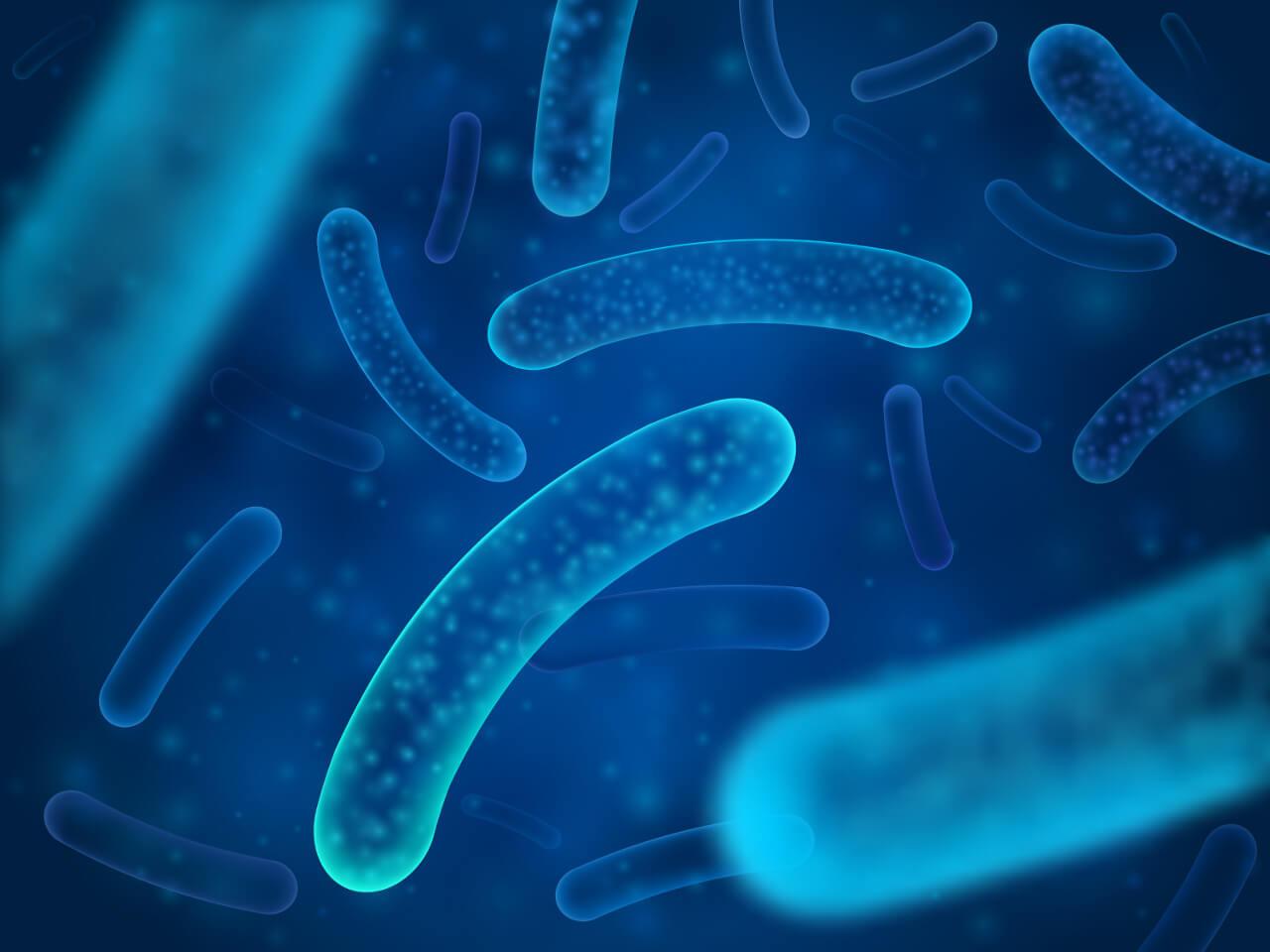 Lactobacillus acidophilus, prospešná baktéria, probiotiká